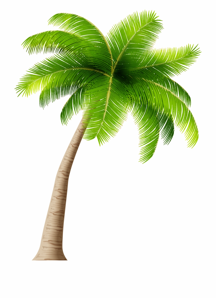 39-394545_palm-tree-png-clipart-image-palm-trees-transparent.png